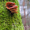Fungi on a Mossy Tree
