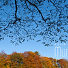 Blue Sky in the Autumn